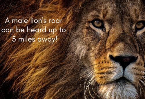 Bible-buddies-Day-4-lion