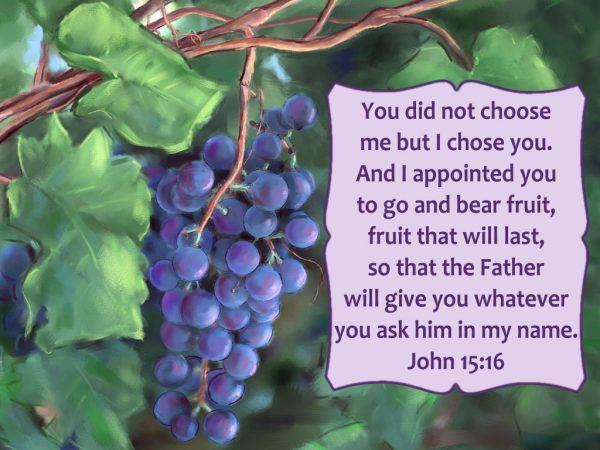 John15-16