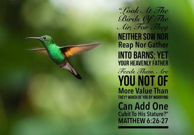 Matthew6_26-27